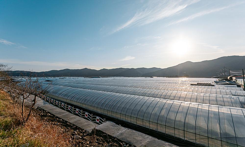 진주농·진주팜 딸기농가